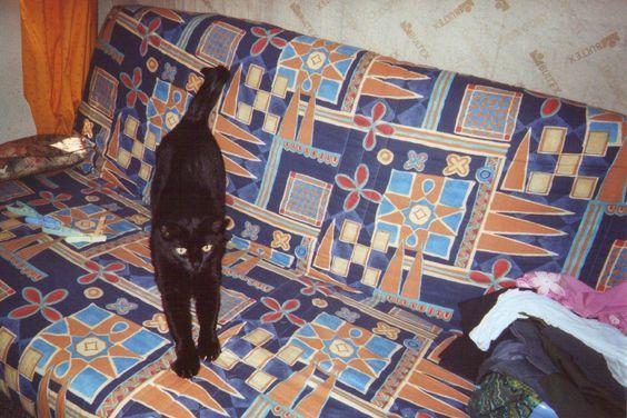 Annie Monego #PerleNoire mon chat poucet noir a eté abandonné a cause de sa couleur il a maintenant 16 ans et je l adore