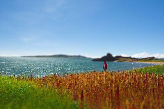 Turista en campo de quinua a orillas del Lago Titicaca, Puno.