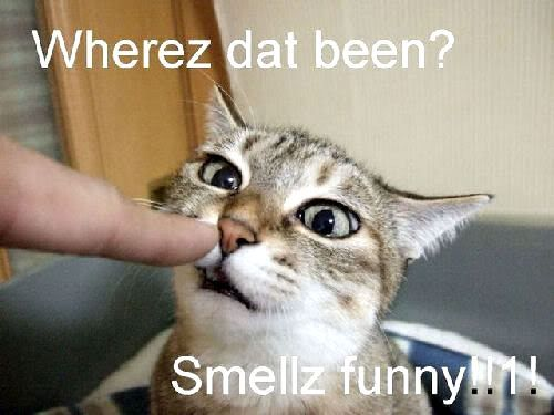 Really Funny Pictures With Words Cats, Lol funny...