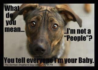 This is what my dog would say ..