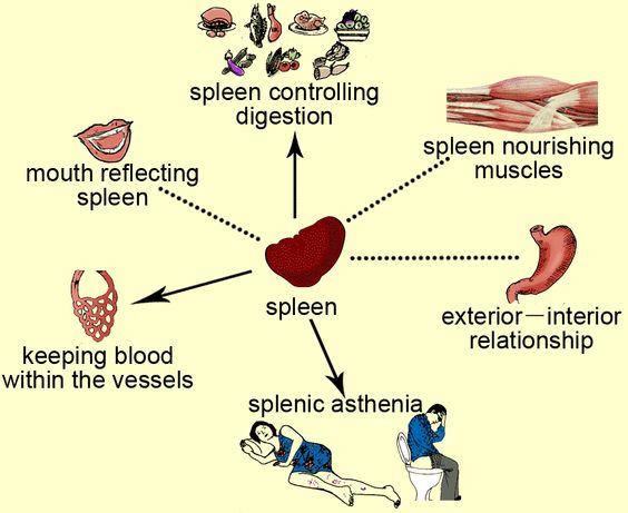 spleen function - google search | acupuncture | pinterest | medical, Human Body