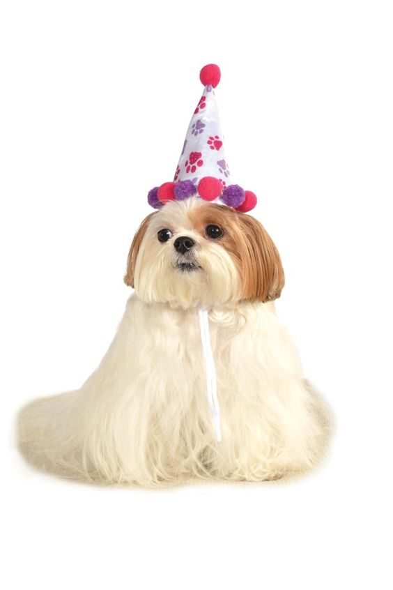 Pin for Later: This Year's Top 10 Dog Halloween Costumes Clown Clown hat ($8)
