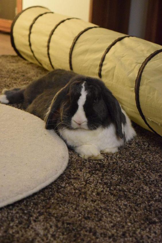 Kaninchenstall selber bauen - Bauanleitung für die Wohnung