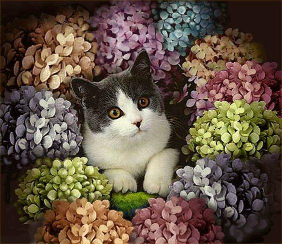 victorian cat:
