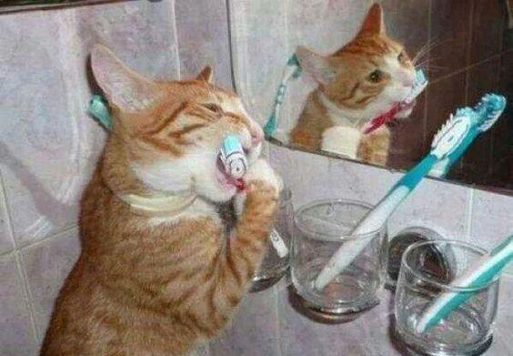 cepillándose sus dientes