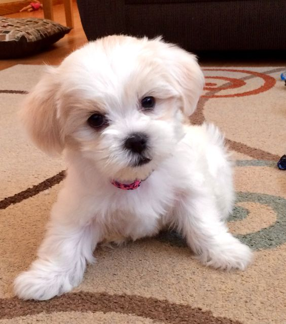 too cute and puppys on pinterest