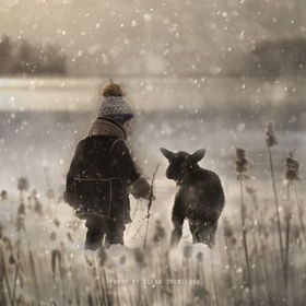 Lost lamb in the snow (art) Elena Shumilova