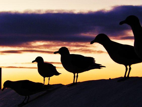 amanecer punta Arenas, patagonia