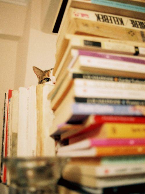 bookish leaves | via Tumblr