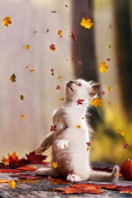Kitten & falling leaves More