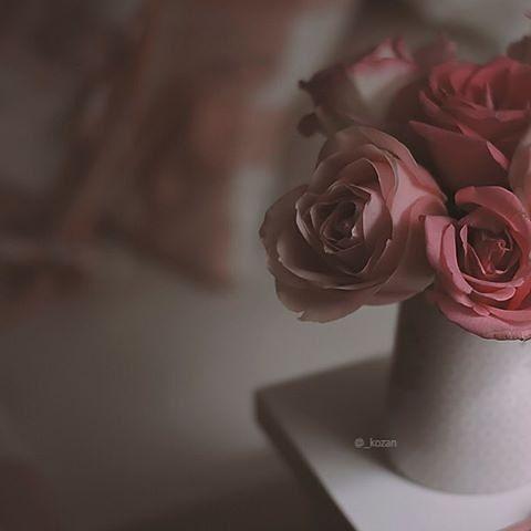 صور تصاميم On Instagram خامات خلفيات للتصميم مخطوطه مخطوطات للتصاميم سكرابز بداية صور تمبلر تصميم صور تصاميم صور ثي Rose Plants Flowers