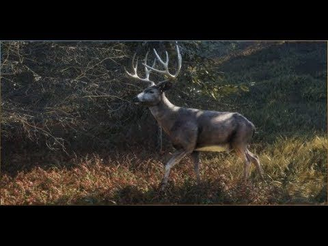 Thehunter Call Of The Wild Bowhunting Blacktails Where To Hunt