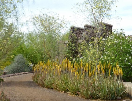 Follow link to benefits of aloe vera as aan excellent drought sensitive  plant (landscape by Noelle Johnson Landscape Consulting).