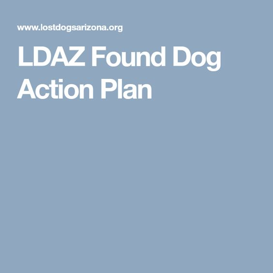 Ldaz Found Dog Action Plan Here Is Our Step By Step Guide To Help