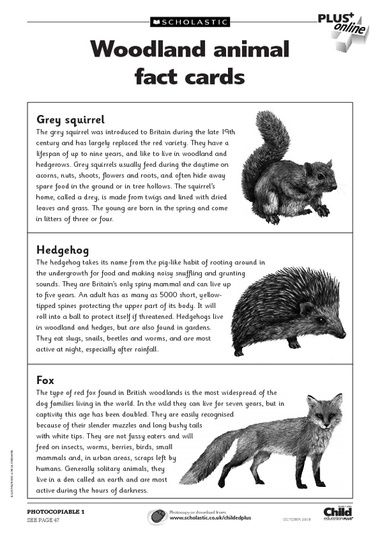 free primary animal worksheets animal fact cards to accompany the woodland poster featured in. Black Bedroom Furniture Sets. Home Design Ideas