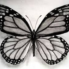 Resultado de imagen para mariposas dibujos lapiz