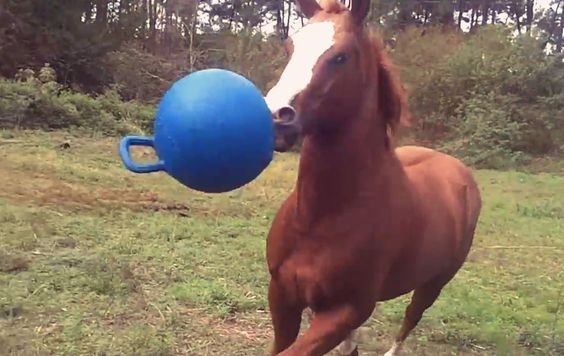 This young #horse is having the time of his life and wants everyone to join in on the fun! #Fascinating