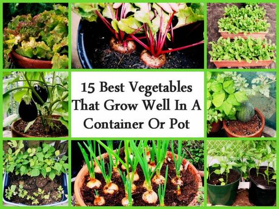 Nice Container Gardening Gardening And Organic Gardening On Pinterest With Magnificent Container Gardening What Vegetables Grow Well In A Smaller Space With Lovely Hanging Gardens Of Babylon Wiki Also Hill House Cadogan Gardens In Addition La Paz Waterfall Gardens And Biddulph Gardens As Well As Garden Gift Set Additionally How Much Is A Busch Gardens Ticket From Pinterestcom With   Magnificent Container Gardening Gardening And Organic Gardening On Pinterest With Lovely Container Gardening What Vegetables Grow Well In A Smaller Space And Nice Hanging Gardens Of Babylon Wiki Also Hill House Cadogan Gardens In Addition La Paz Waterfall Gardens From Pinterestcom