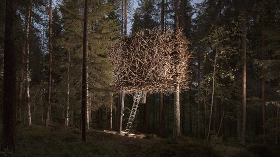 treehotel birds nest exterior