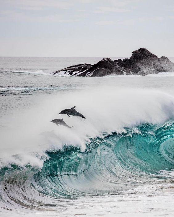 🐬 Cape Naturaliste, #WesternAustraliaPhoto by @SeanScottPhotographyExplore. Share. Inspir