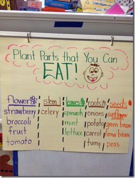 plant parts chart