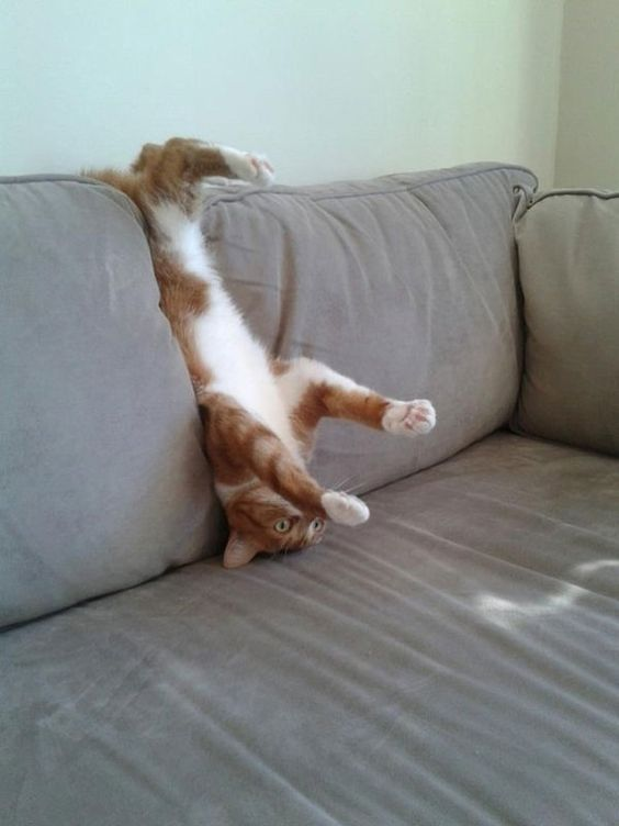 27 Cats And Dogs Losing The Battle Against Human Furniture