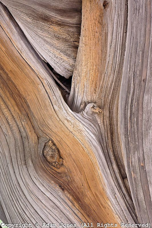 Close-up pattern of Cypress tree bark, Zhongshan Park, Beijing, China: