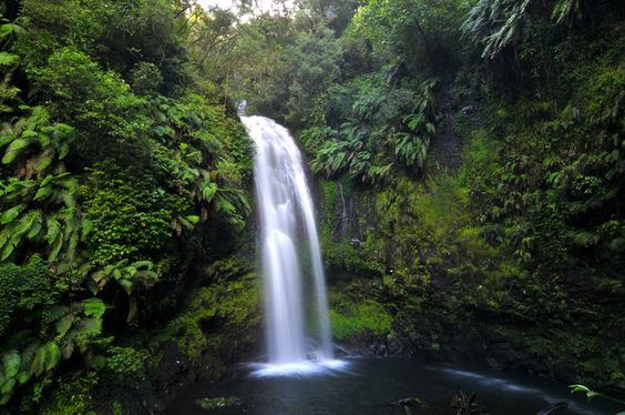 Nationalpark Montagne dAmbre im Madagaskar Reiseführer http://www.abenteurer.net/2261-madagaskar-reisefuehrer/