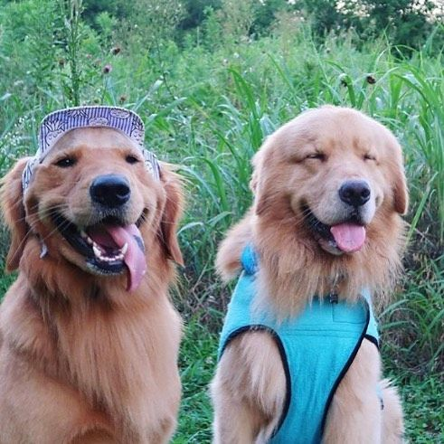 Hangin With Friends And Staying Cool In The Summer Heat Thanks Leviatyourservice For The Photo Coatsmadebyde Etsy Agili Custom Dog Dog Coats Dog Clothes