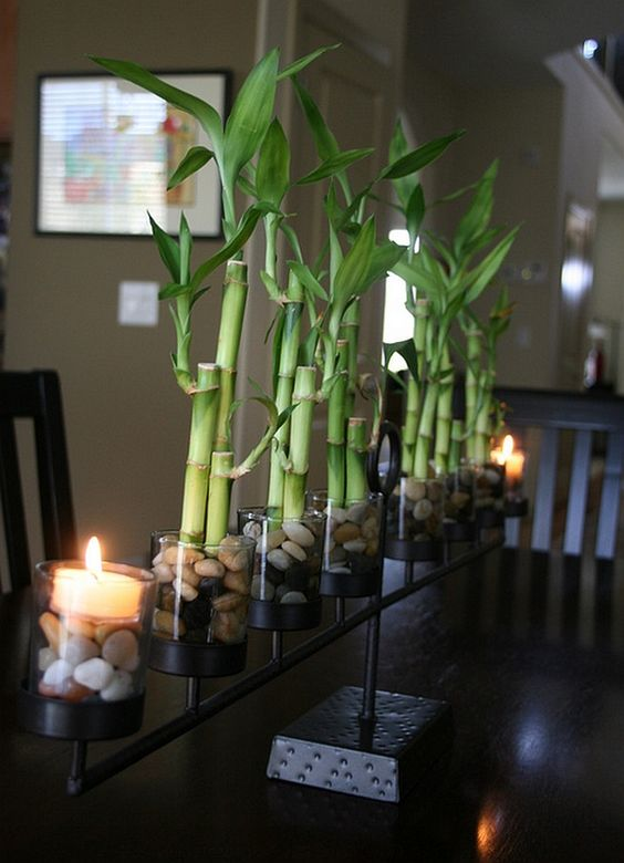 series of lucky bamboo plants placed beside together creating a ambient indoor environment