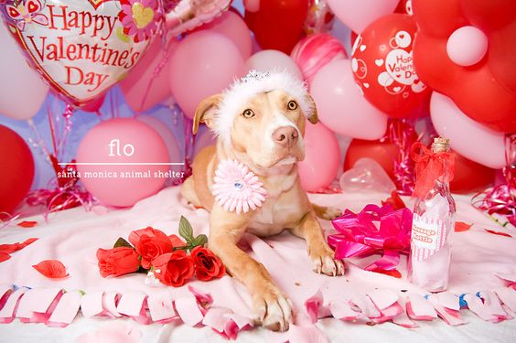Adoptons! - Page 9 35aa19301da29273dee40fec66c07412--happy-valentines-day-animal-shelter