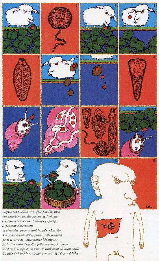 """G. Falk – Le cycle de la douve du foie, illustration for """"Le Livre de la Sante"""" by Joseph Handler, volume 14: Climat—Plantes—Parasites—Pollution—Allergie, 1968"""