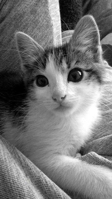 Cats 8