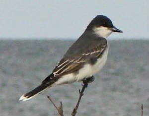 South Texas bird!