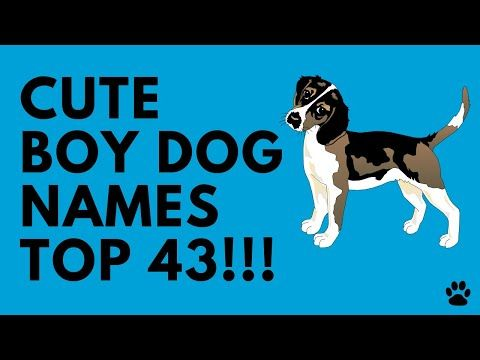 Cute Boy Dog Names Top 43 Ideas In 2020 Dog Names Boy Dog Boy