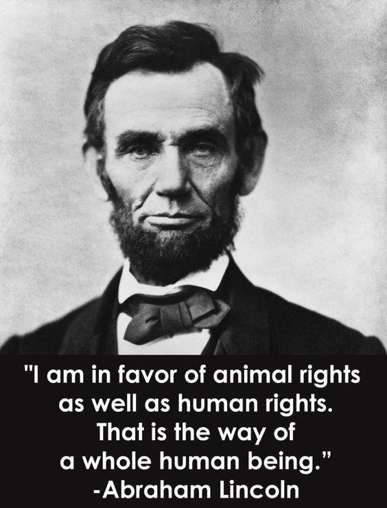 """""""Estoy a favor de los Derechos de los Animales tanto como de los Derechos Humanos. Es la única manera de ser un humano completo"""". Abraham Lincoln:"""