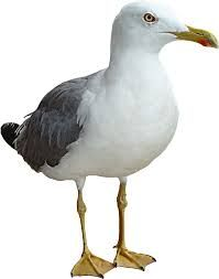 Image result for cute seagull clipart
