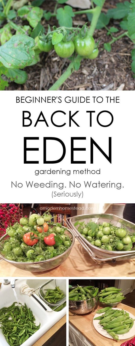 How We Grew 300lbs Of Food Without Weeding Or Watering A Single Time