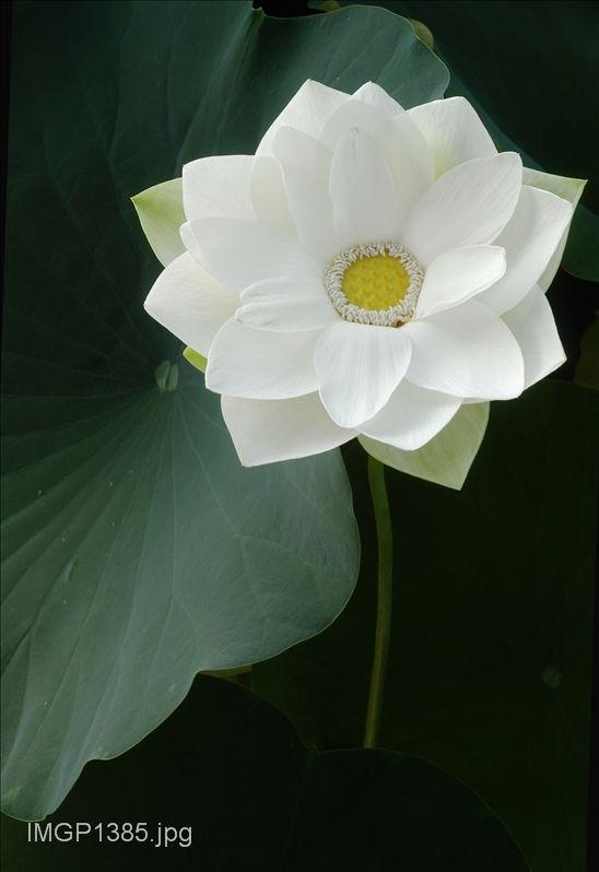 صور عالية الدقه Photo Galleries Photo Plants