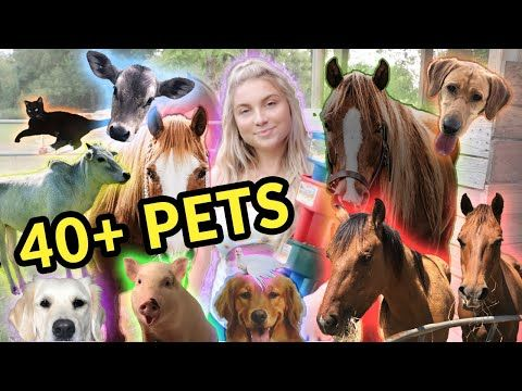 Feeding All My Pets In One Video 40 Pets Youtube Pets