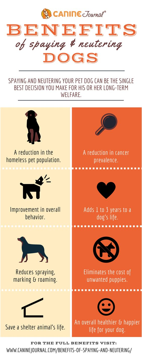 The top, Benefits of and Dogs on Pinterest