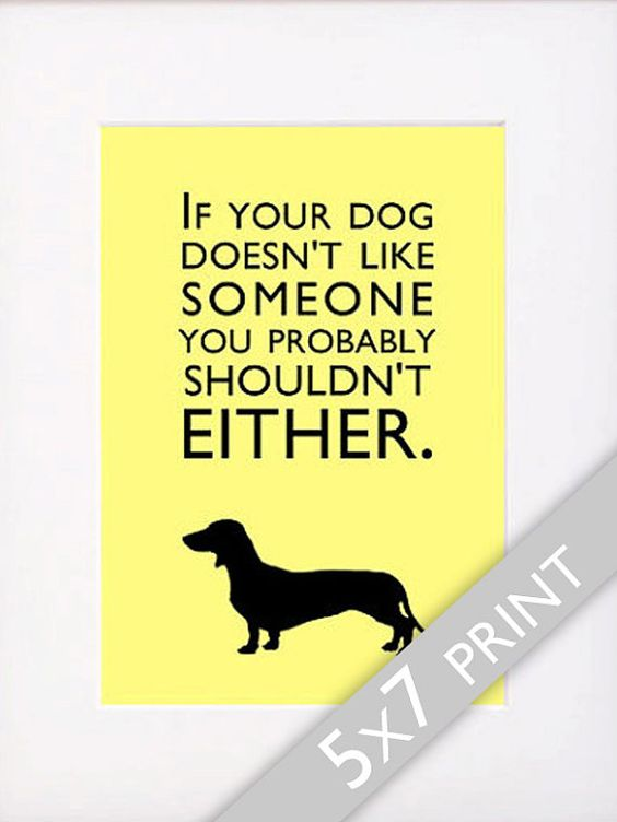 Be Suspicious Of Anyone Who Doesn T Like Dogs