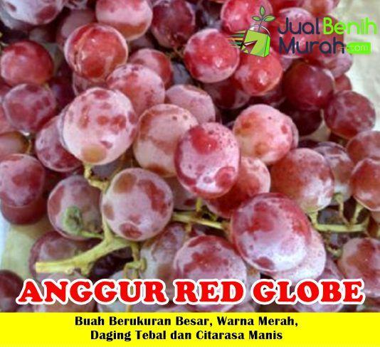 Khasiat Buah Anggur Merah Bagi Kesehatan