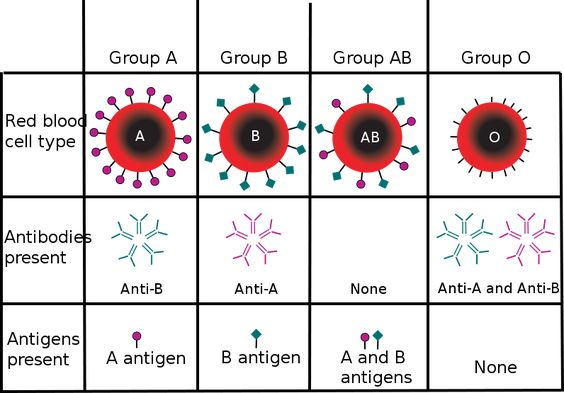 Blood type chart