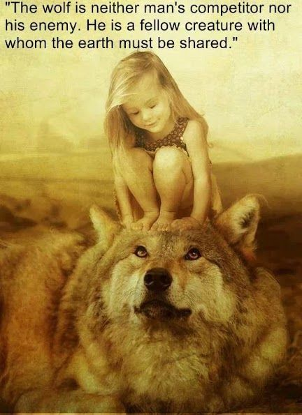 Wolf - Beautiful and true saying. My favorite animal of all!!!