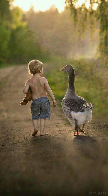 We 'ave a goose who's real friendly 'round us, where I stay at times. One day I saw a lil boy carryin' the goose, legs a danglin' up the hill, so I stopped n asked 'im what he was doin'. He said he was bringin' it home to love. I 'xplained the goose had a family that 'd miss 'im, but he could visit the goose whenever he wanted ... n they lived Happily Ever After! :):