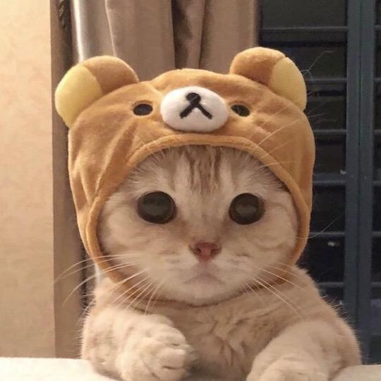 Pin Oleh Darren Athan Di Kucing Aeshetict Kucing Dan Anak Kucing Kucing Bayi Anak Kucing Lucu