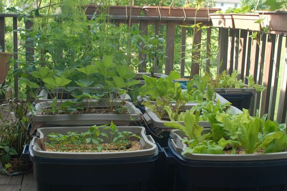 Apartment Gardening Using Double Stacked Rubbermaid Containers The Inner Container Is One Size