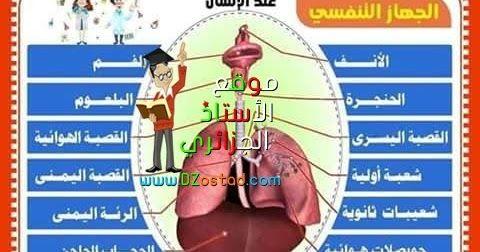 درس الجهاز التنفسي و الهواء مادة التربية العلمية السنة الرابعة و الخامسة ابتدائي الجيل الثاني Respiratory System Education System