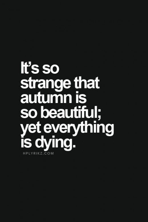 But is it strange? Beauty is in everything, even death, for death makes way to birth.....nature has so much to teach us if we just take the time to notice and listen.